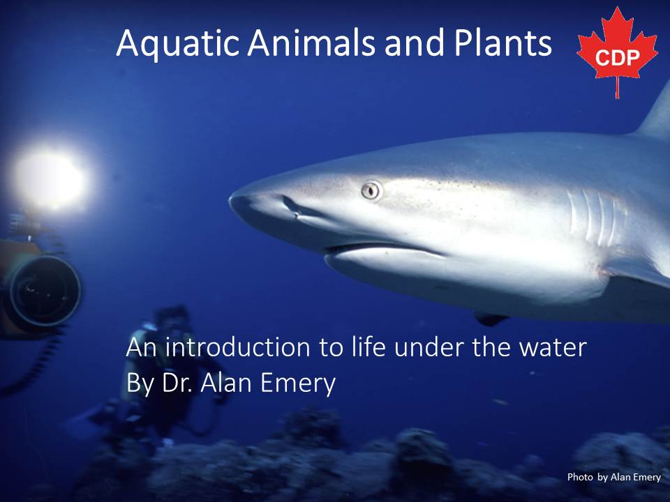 aquatic animals and plants an introduction kivu