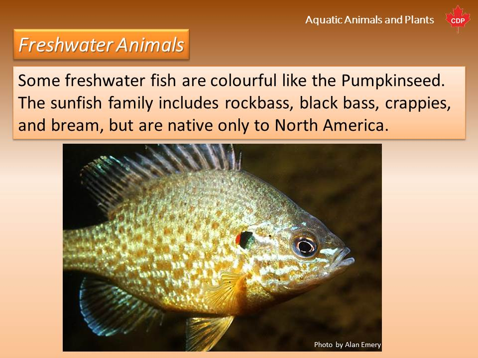 Aquatic Animals and Plants: An Introduction | Kivu